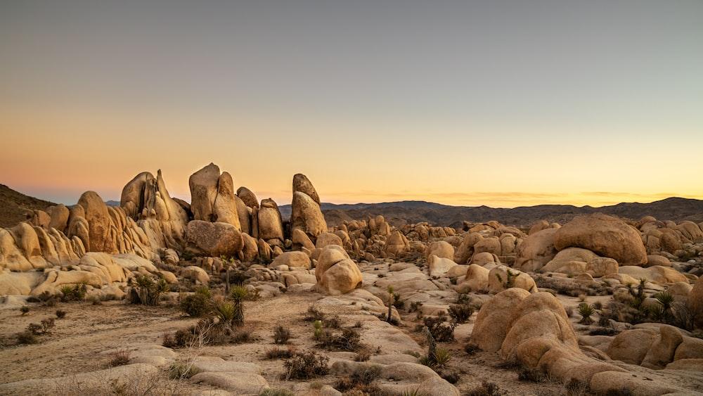 brown rocks on brown field during daytime