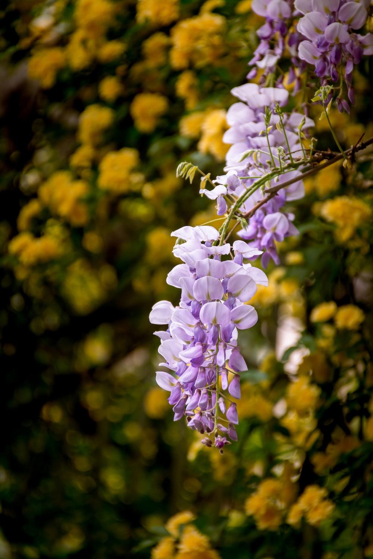 purple and white flower in tilt shift lens
