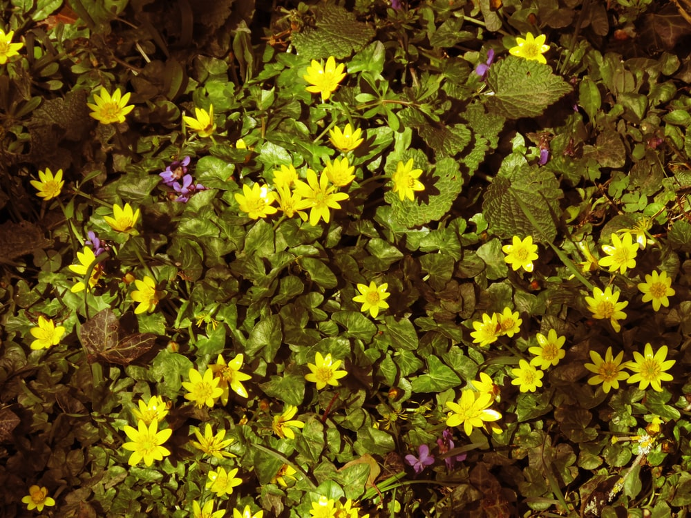 yellow and green flower plants
