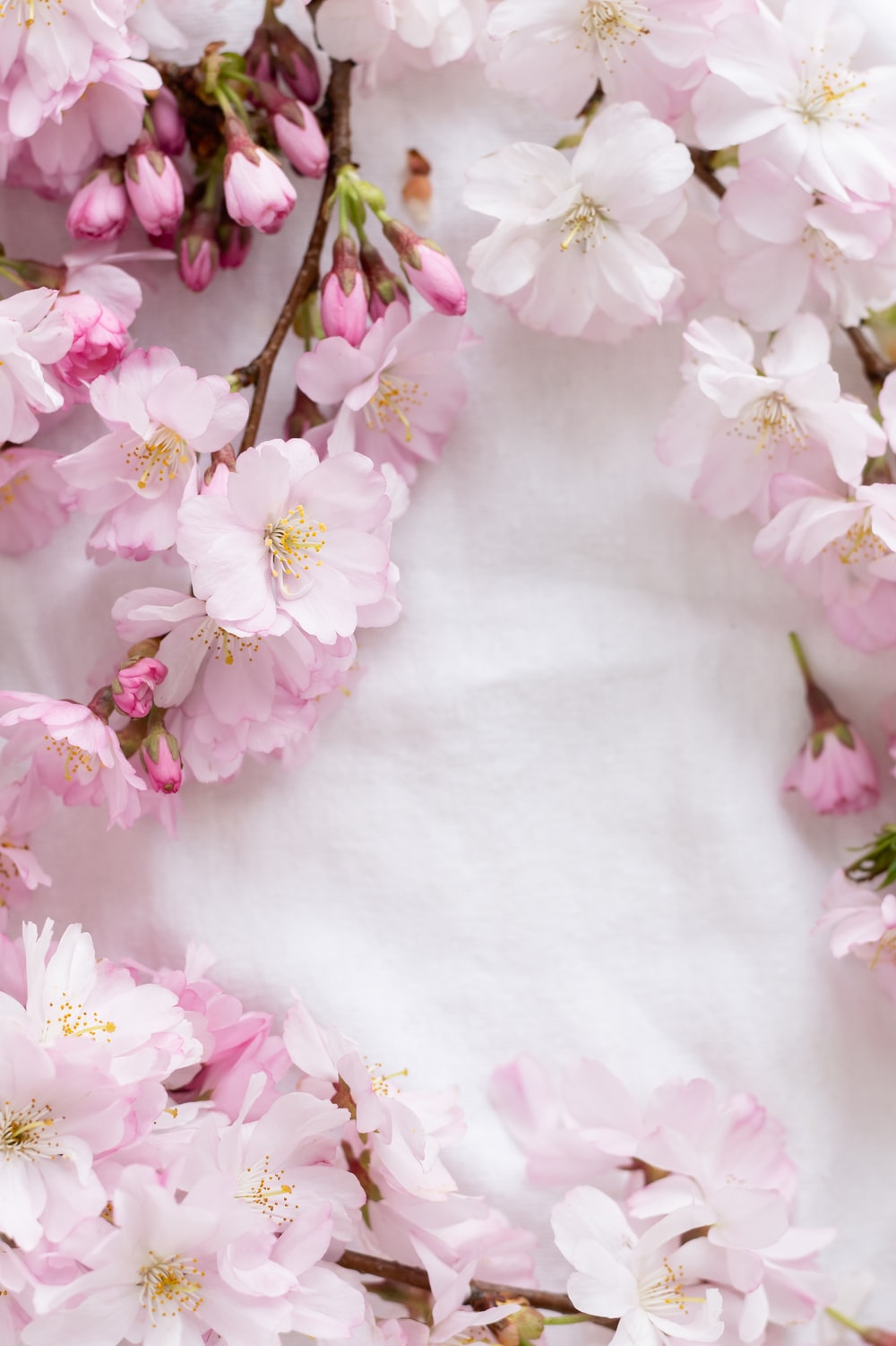 pink and white flowers on white textile