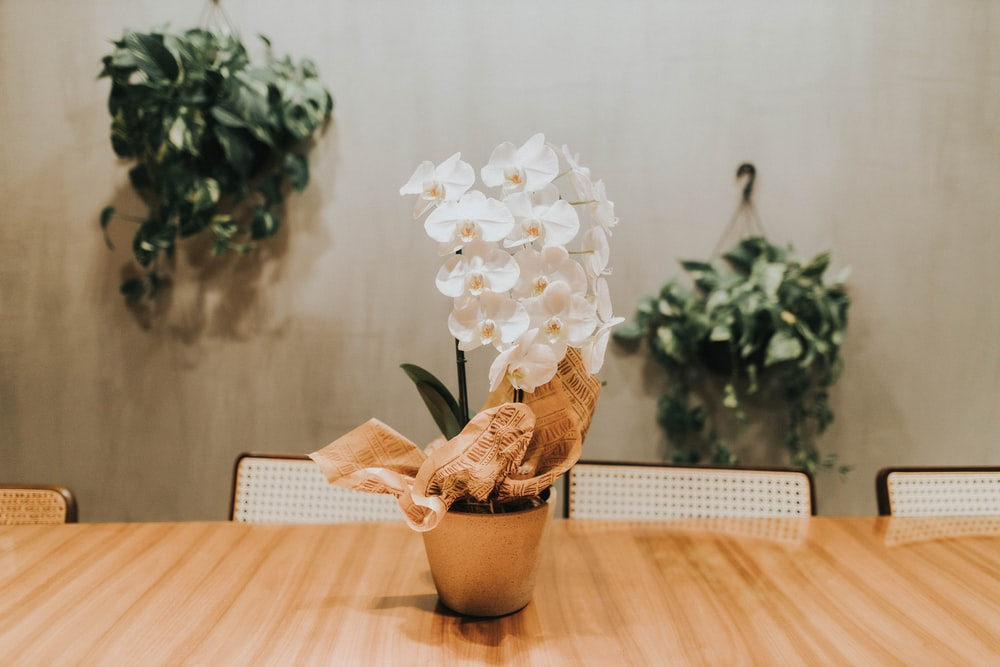 white flower in brown pot on table