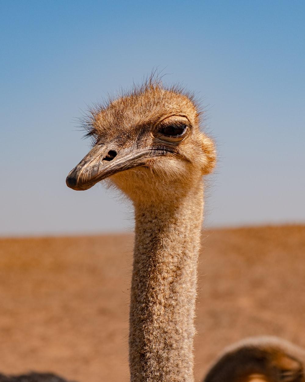 ostrich head under blue sky during daytime