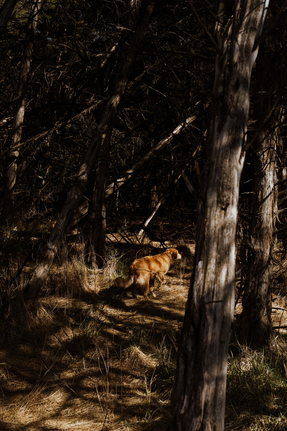 brown short coated dog on forest during daytime