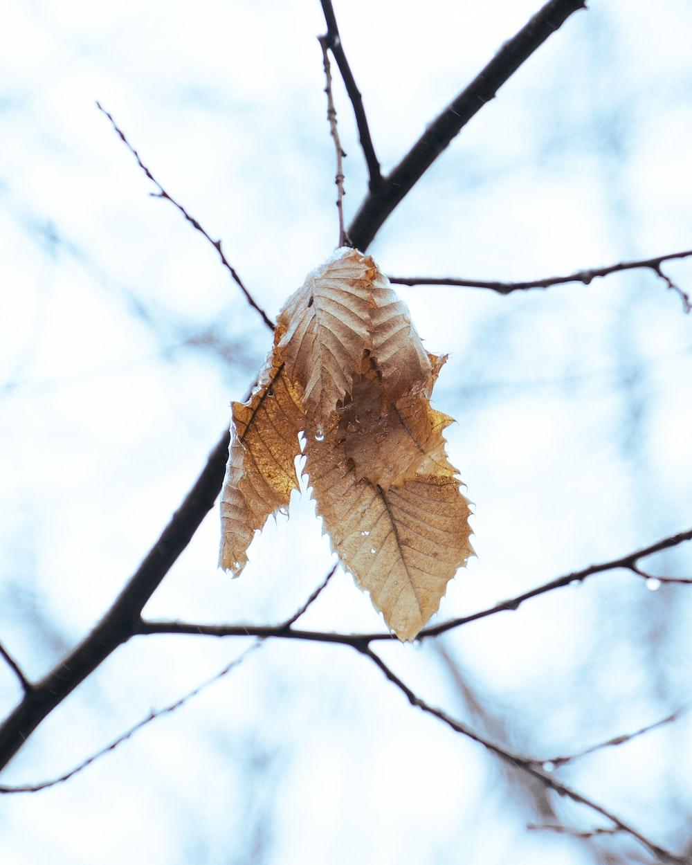 brown leaf on black tree branch during daytime