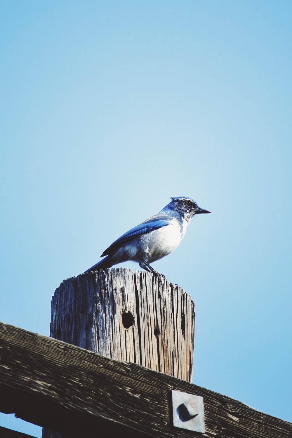 white and blue bird on brown wooden fence during daytime