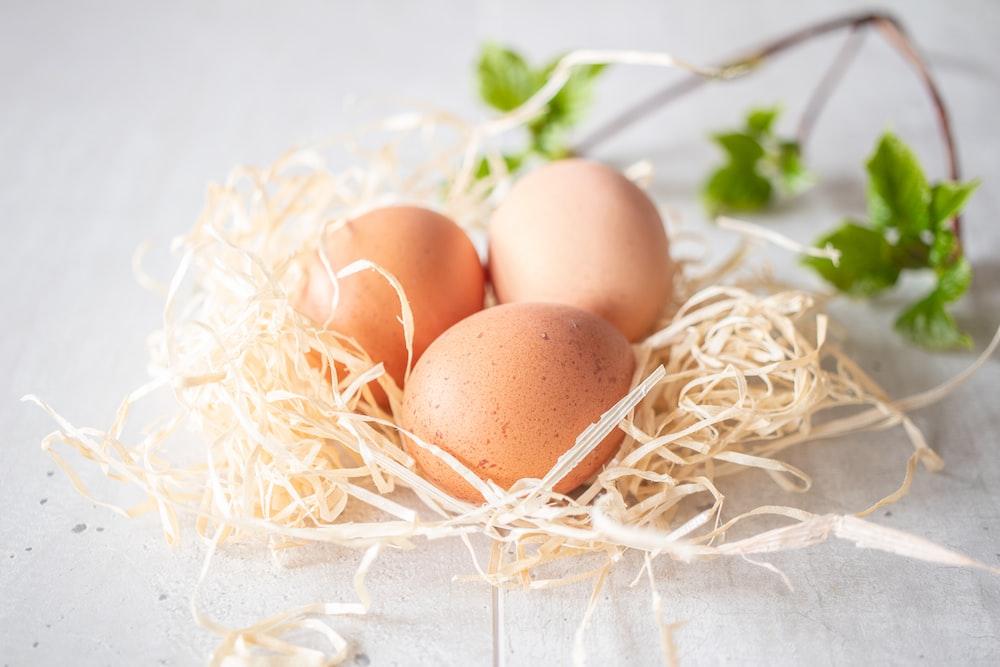 brown egg on white nest