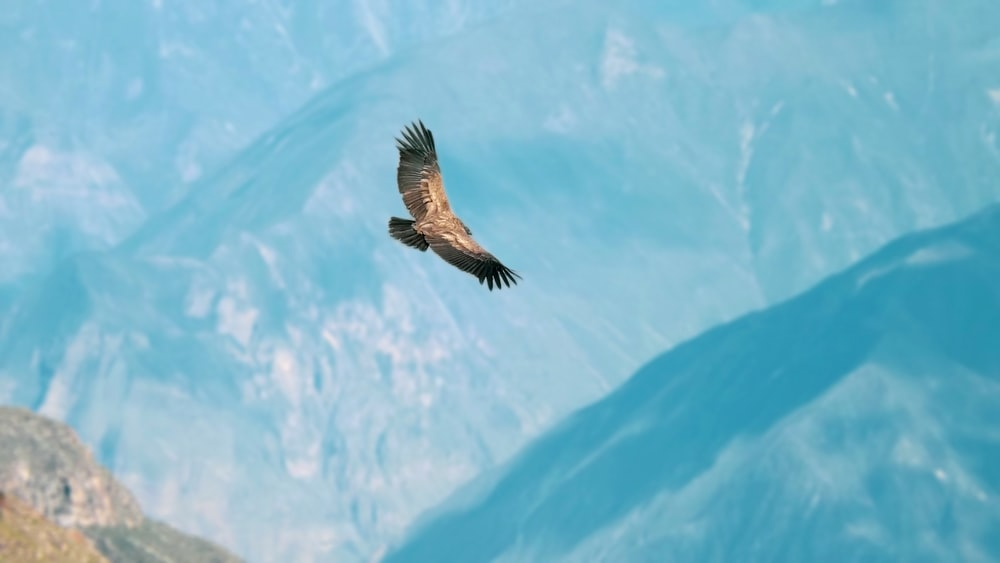brown bird flying over the mountain
