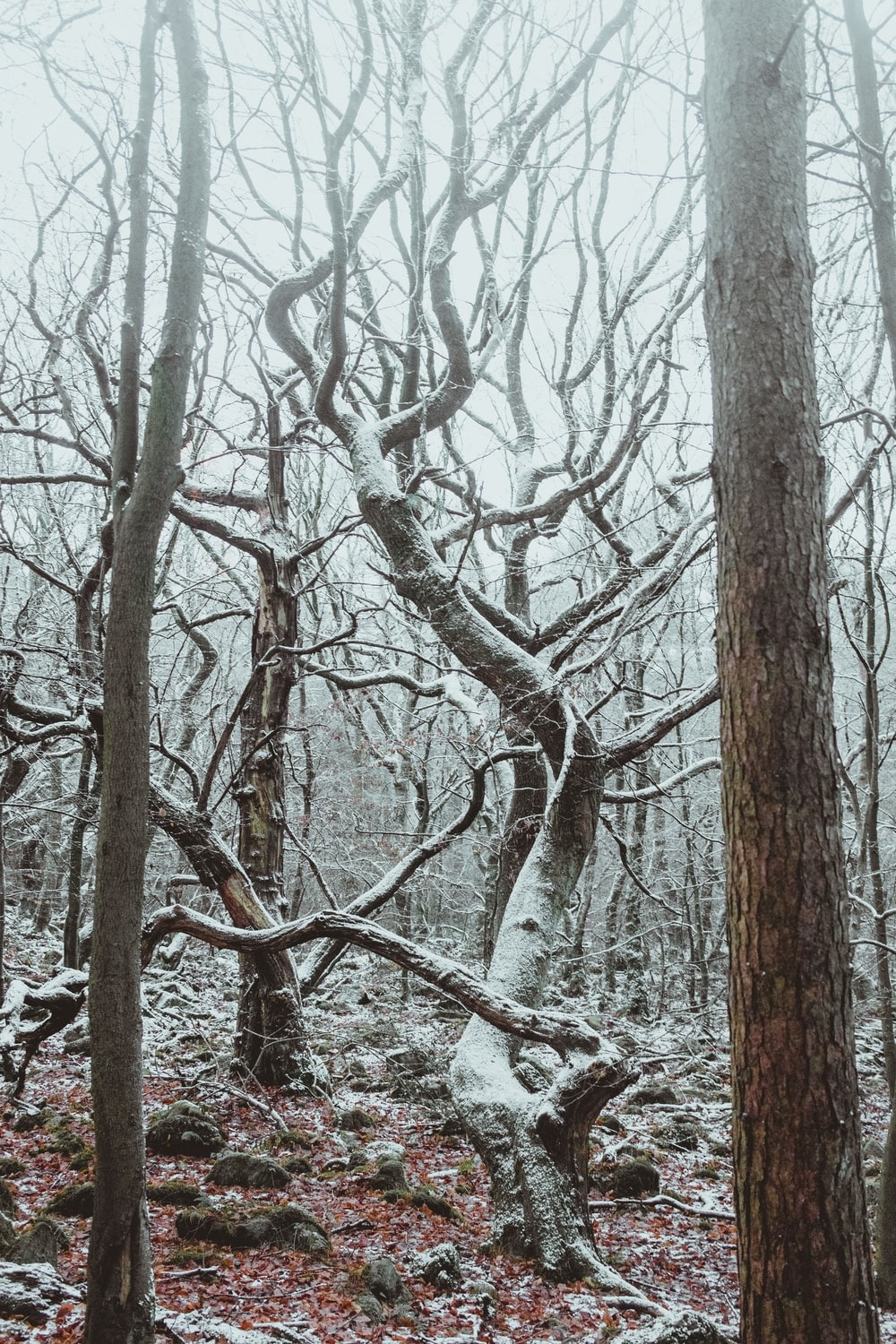 brown leafless tree covered with snow