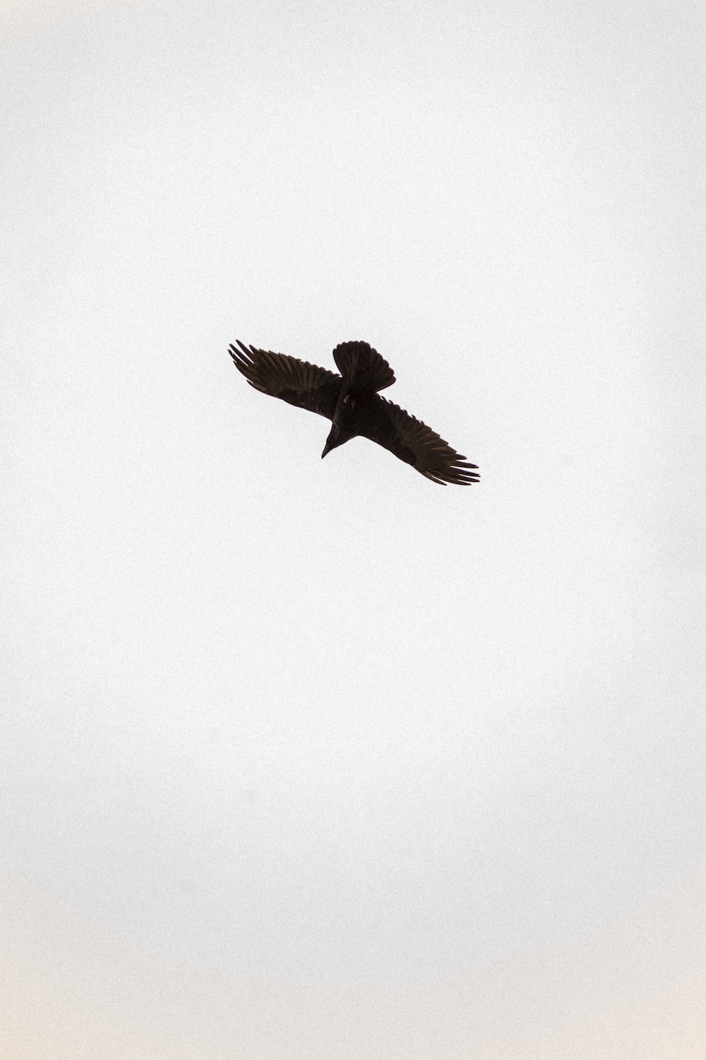 brown bird flying on white wall