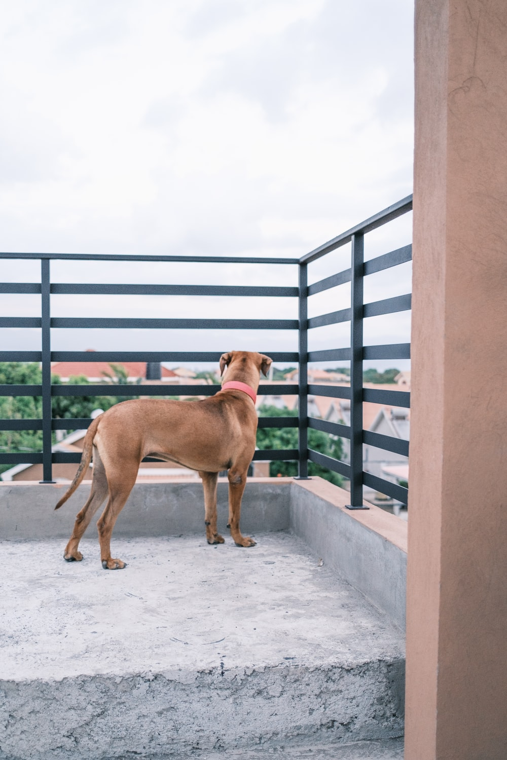 brown short coated medium sized dog on gray concrete floor during daytime