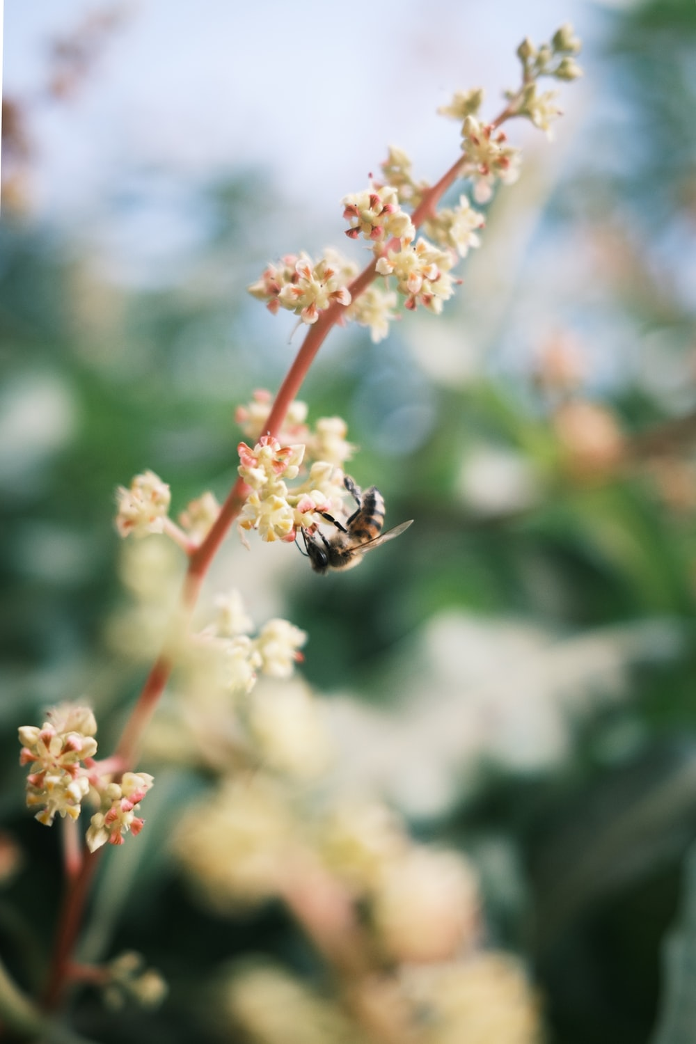 honeybee perched on white and red flower in close up photography during daytime