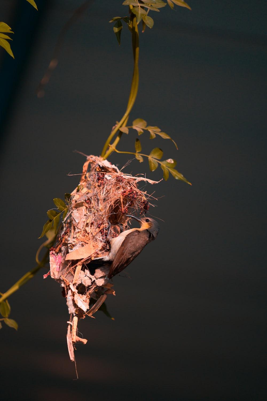 brown dried flower in tilt shift lens