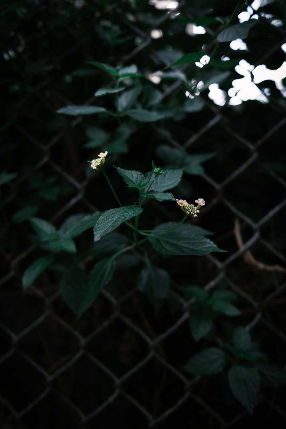 yellow flower in green metal fence