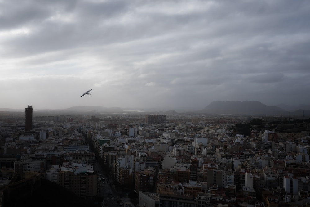 bird flying over city buildings during daytime