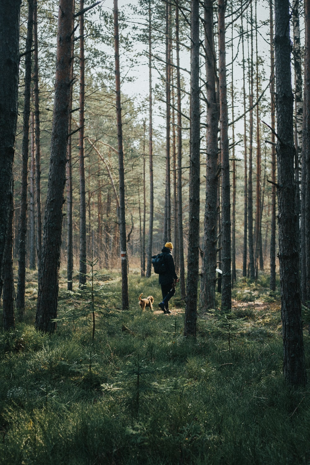 man in black jacket and brown dog walking on forest during daytime