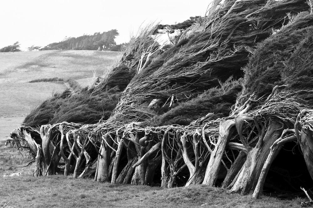 grayscale photo of wood log