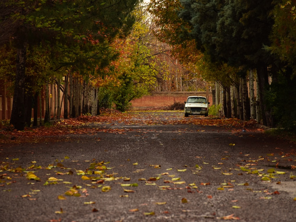 white car on road in between trees during daytime