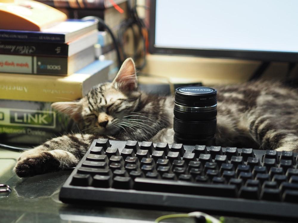 silver tabby cat on black computer keyboard