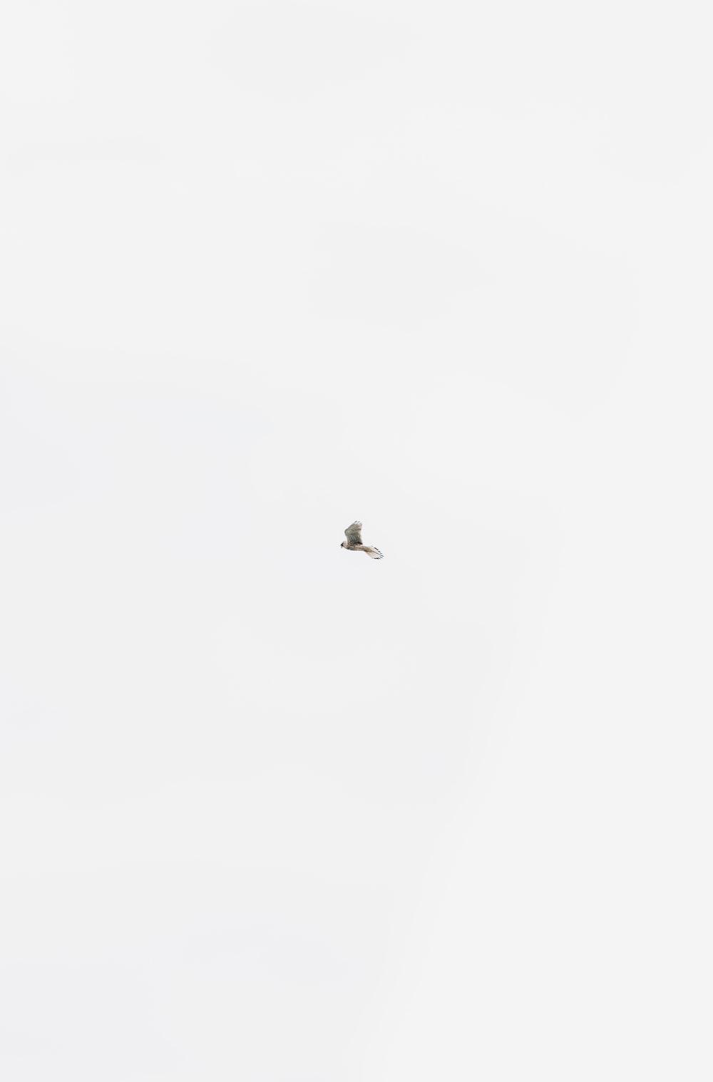 bird flying on mid air