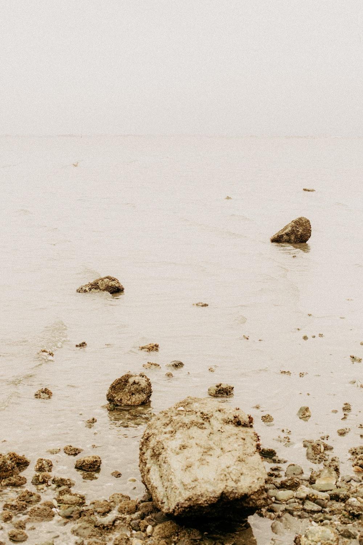 gray rocks on white sand during daytime