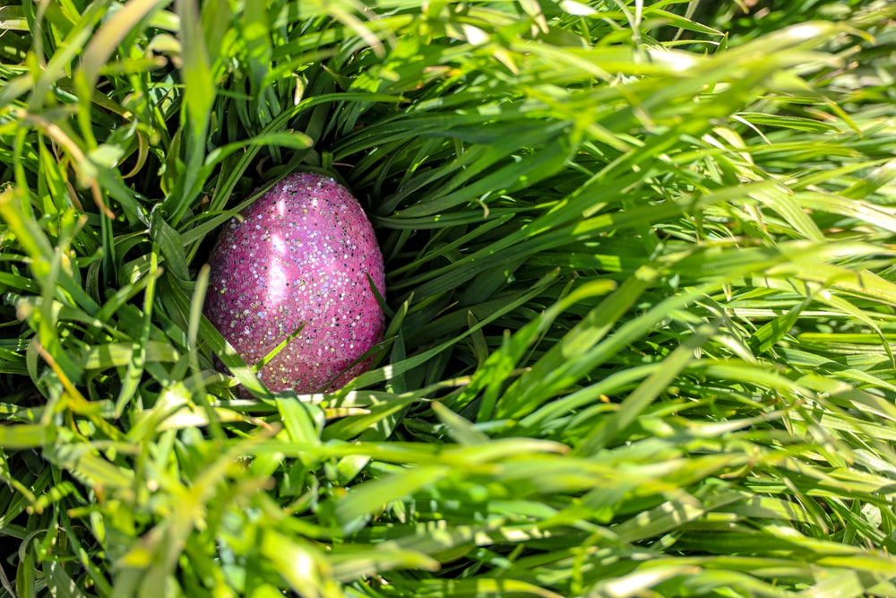 purple fruit on green grass