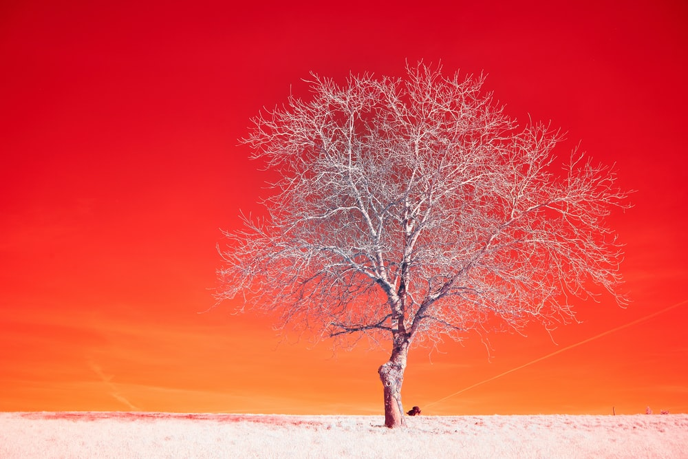 brown bare tree on white sand during daytime