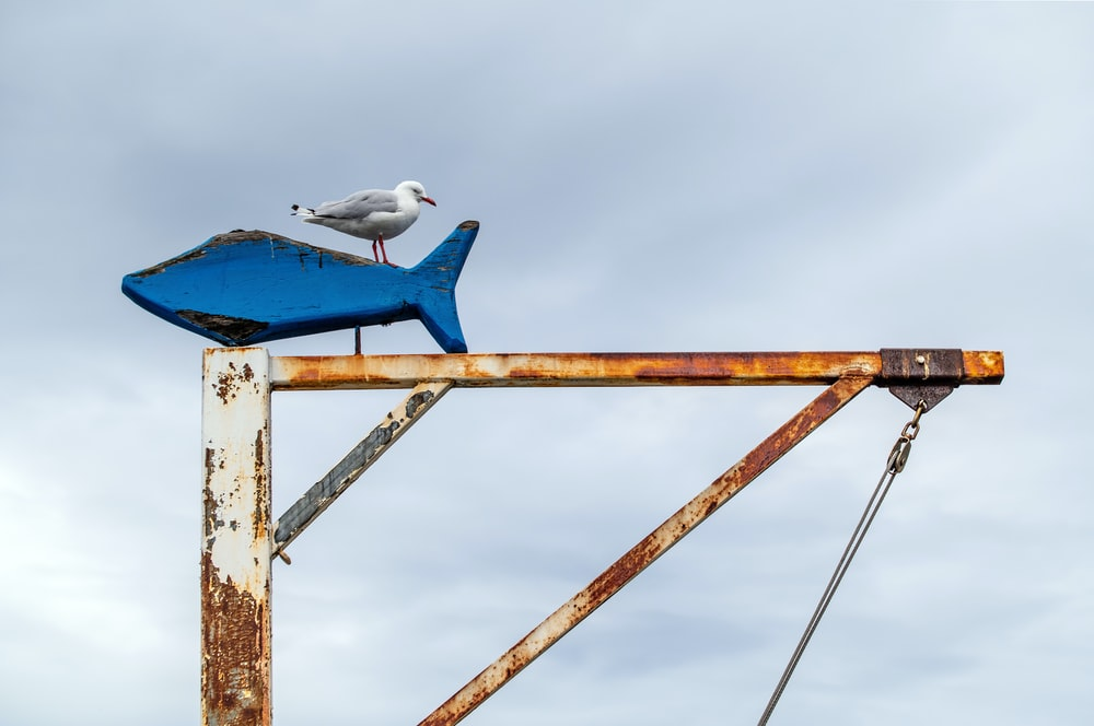 white and blue bird on brown wooden post