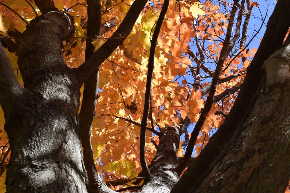 brown tree with orange leaves