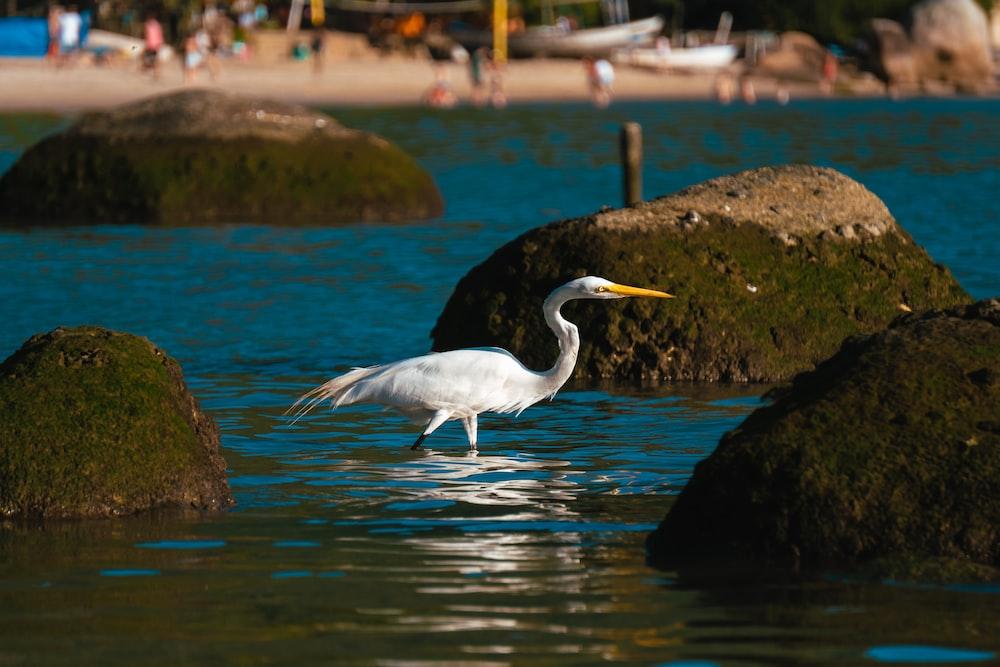white stork flying over the river during daytime