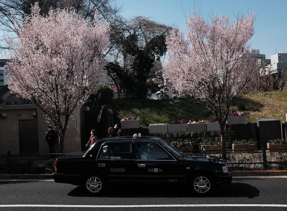 black sedan on road near pink cherry blossom trees during daytime