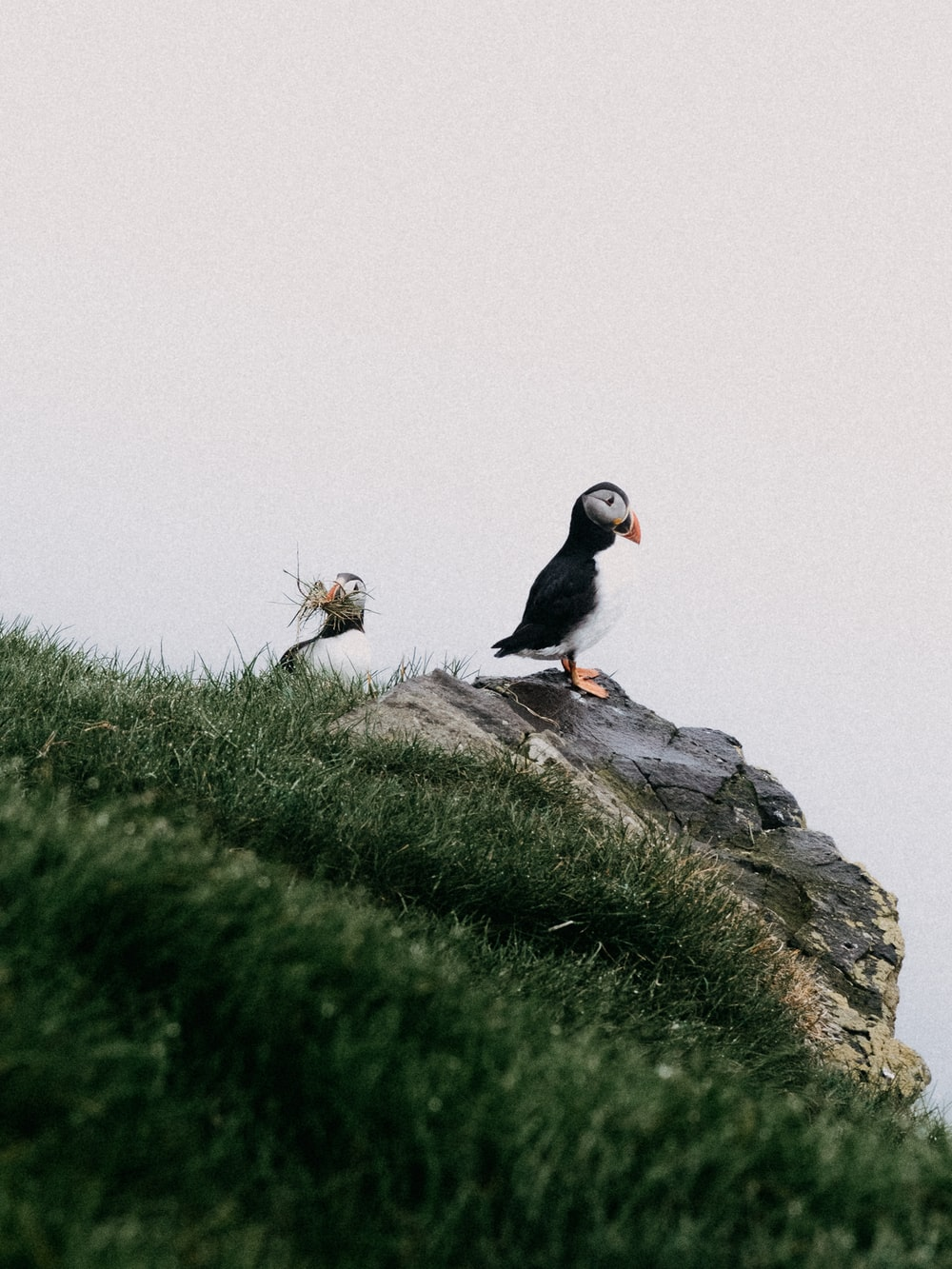 black and white bird on gray rock during daytime