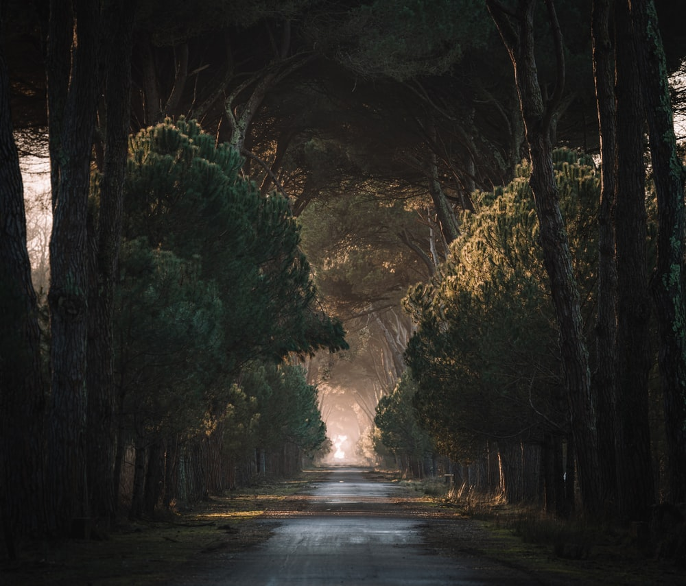 empty road in the middle of trees