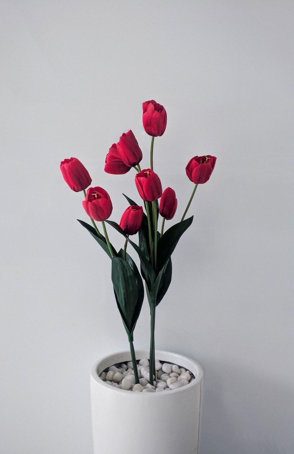 red tulips in white ceramic vase