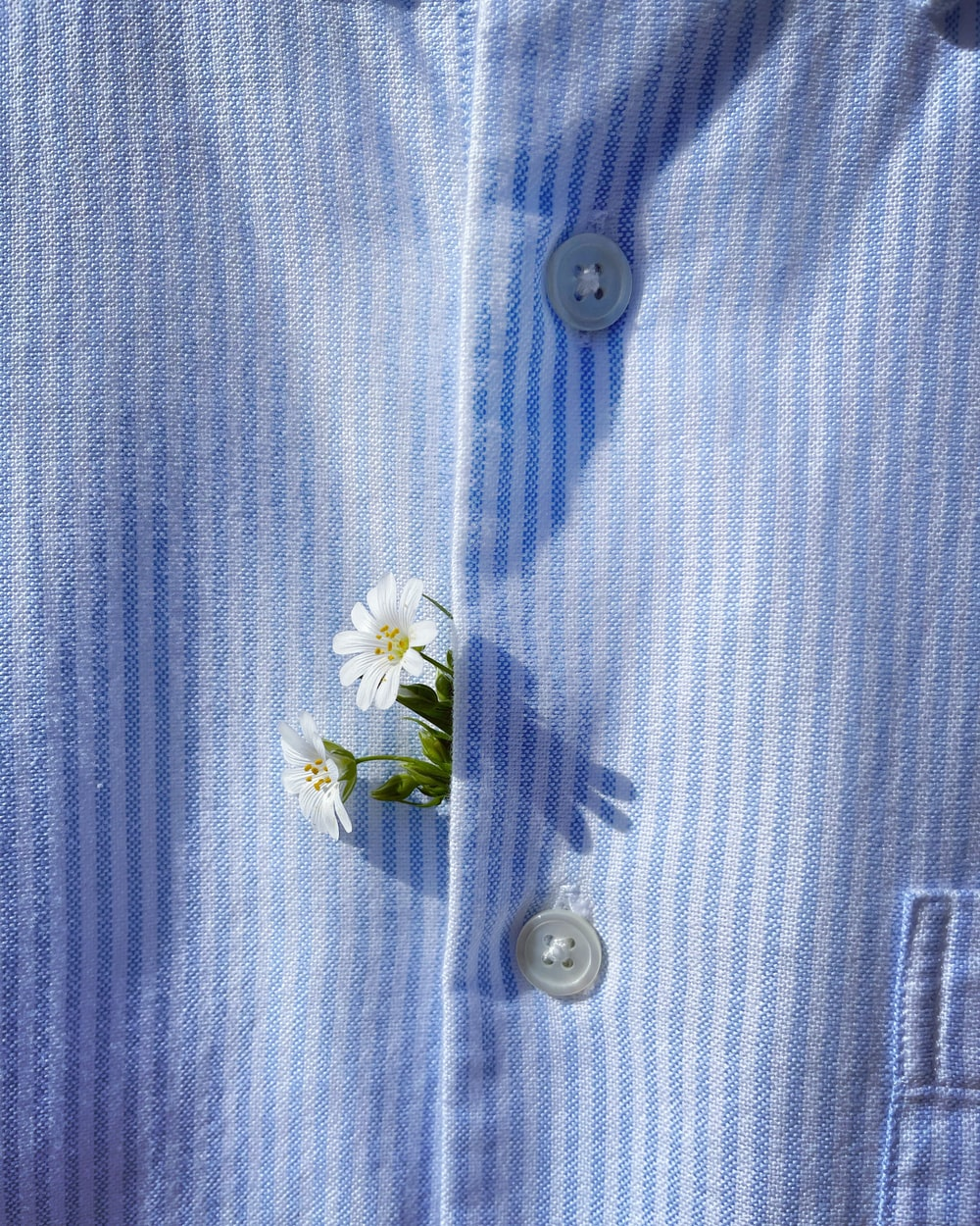 blue and white button up shirt