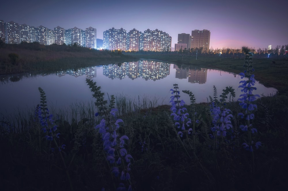 purple flowers near body of water during night time