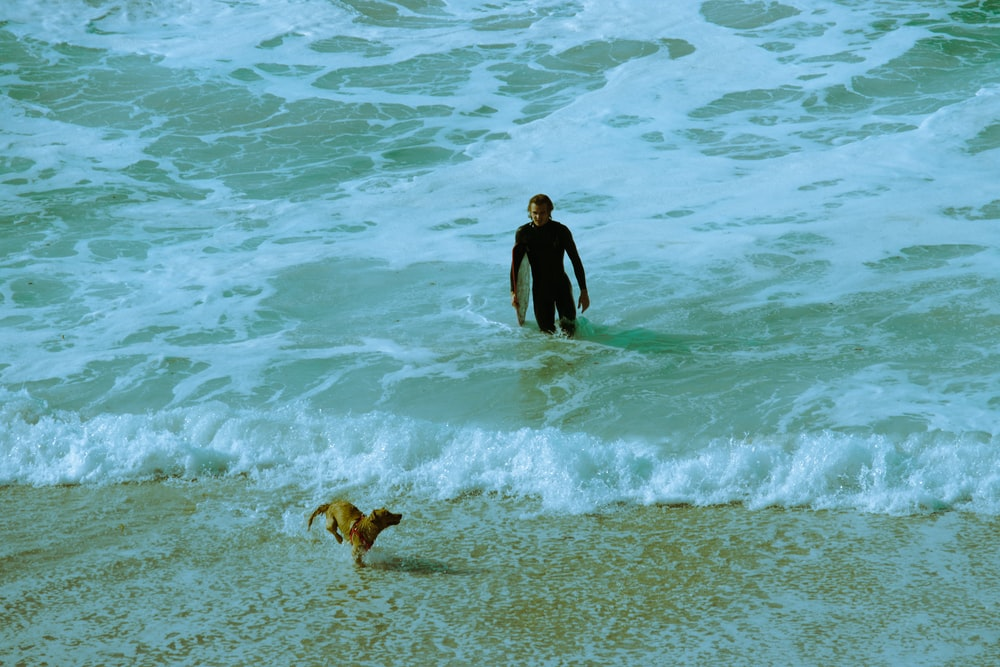 man in black wet suit walking on beach with brown short coated dog during daytime