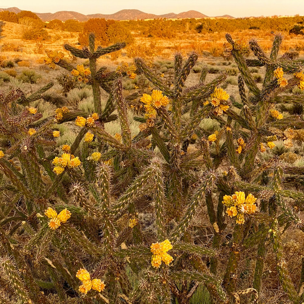 yellow flowers on brown field during daytime