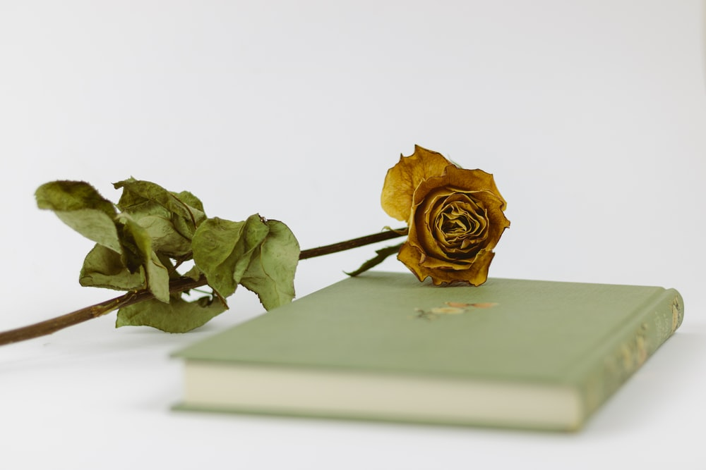 gold rose on white book
