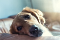 Study Says, Canine Coronavirus Causes 'Severe Vomiting' in Dogs