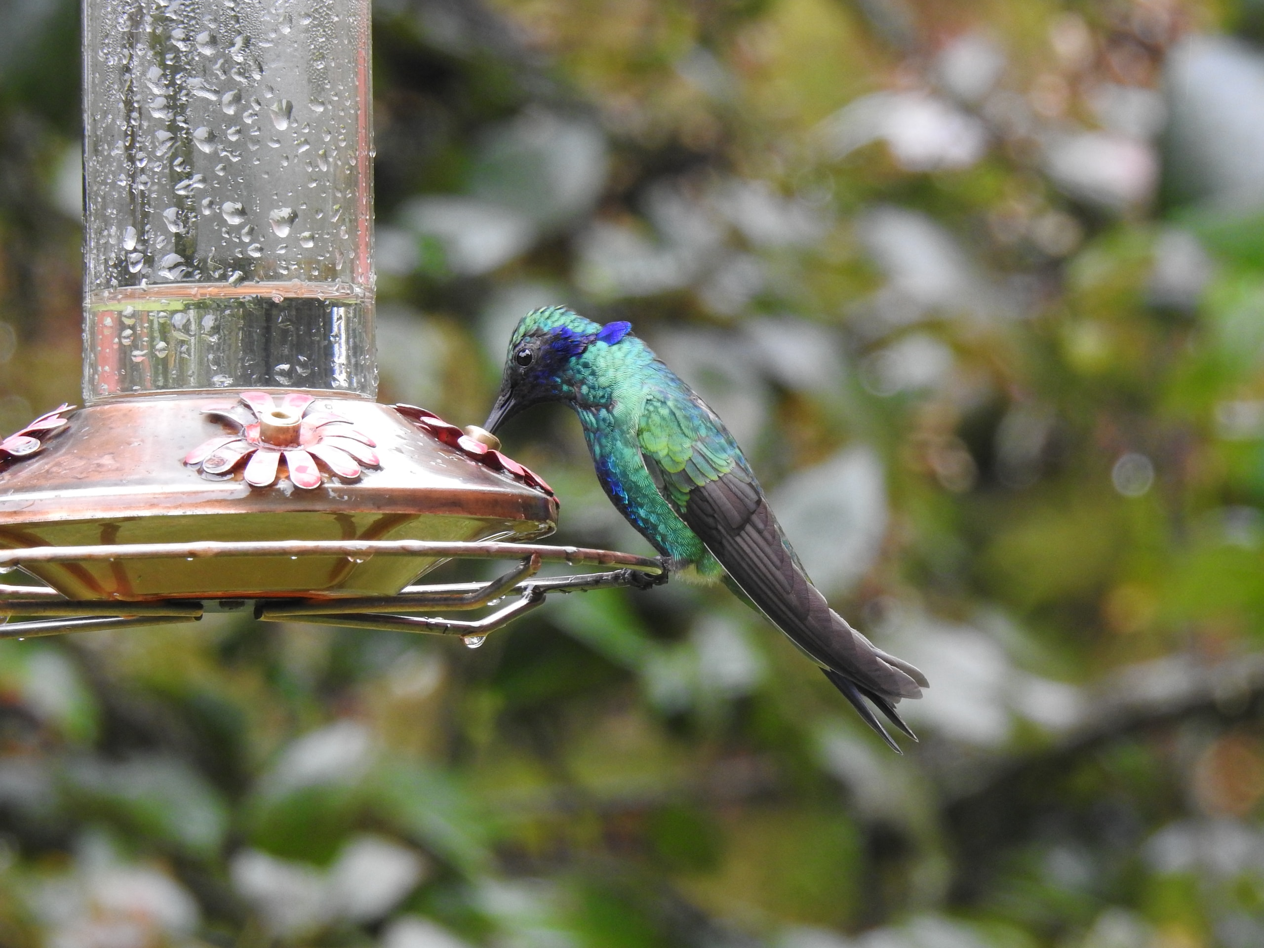blue and green bird on brown bird feeder