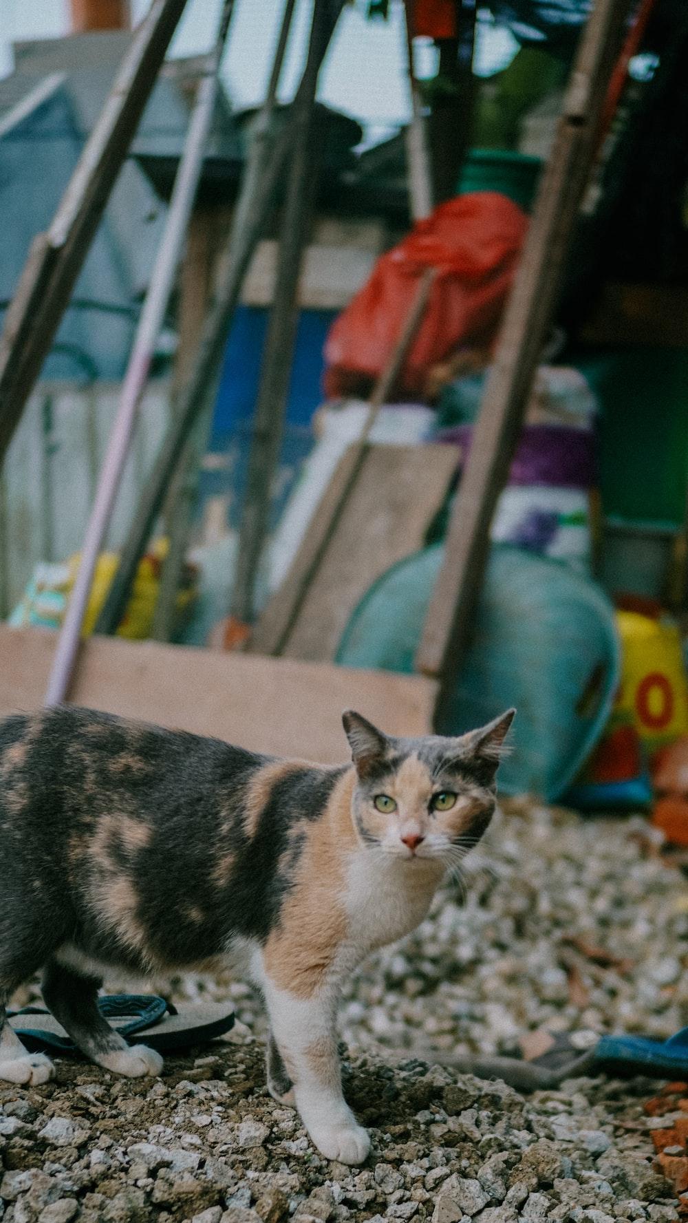 calico cat on gray concrete floor