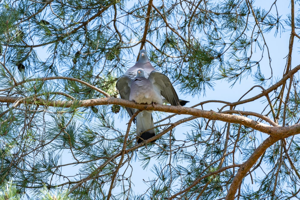 white and gray bird on brown tree branch during daytime
