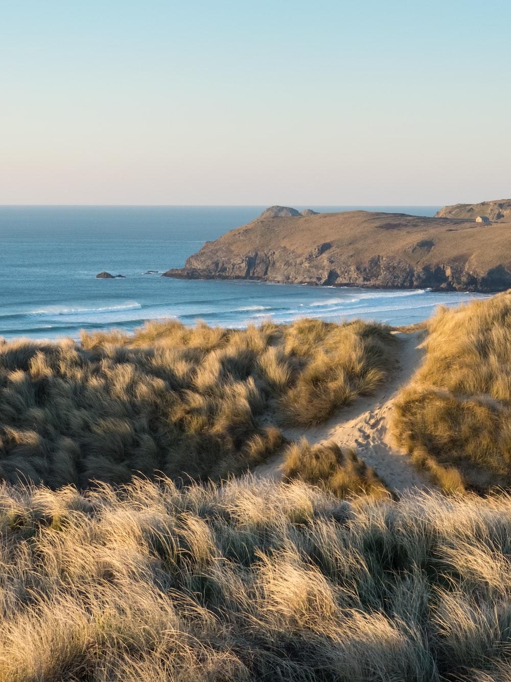 brown grass on seashore during daytime