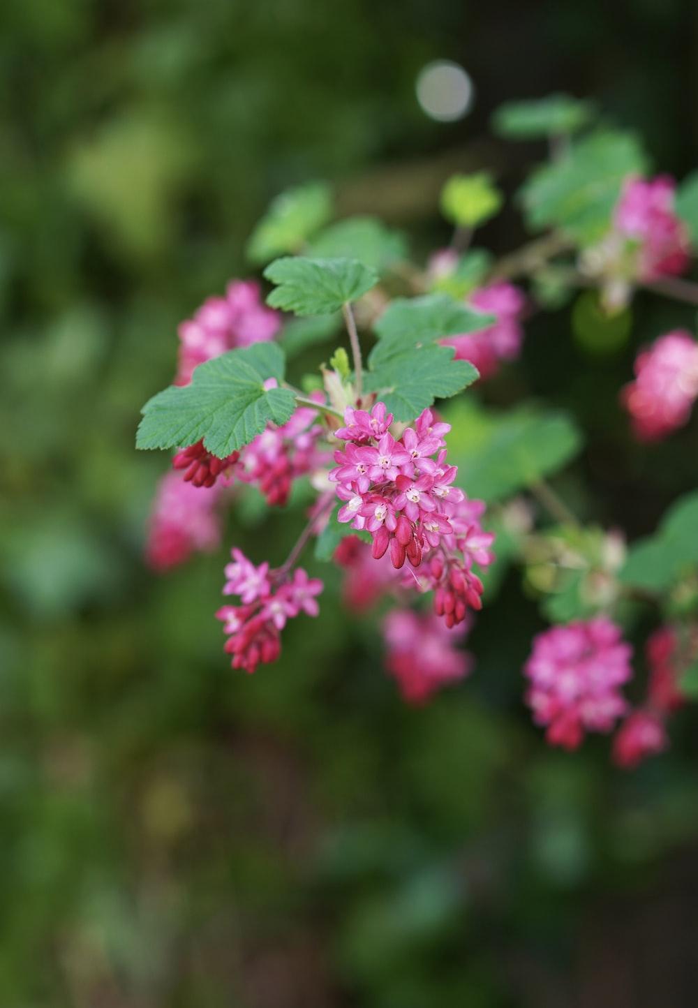 pink flower in tilt shift lens