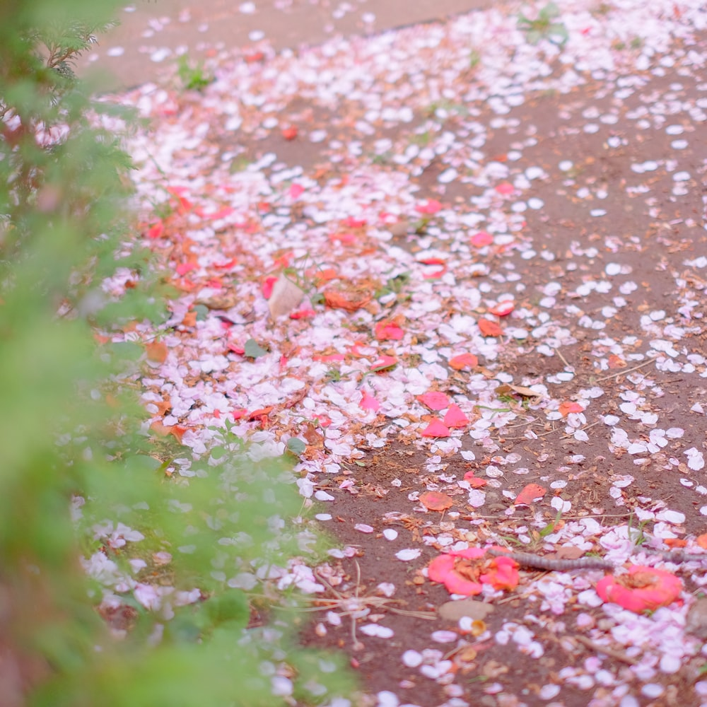 pink petals on the ground