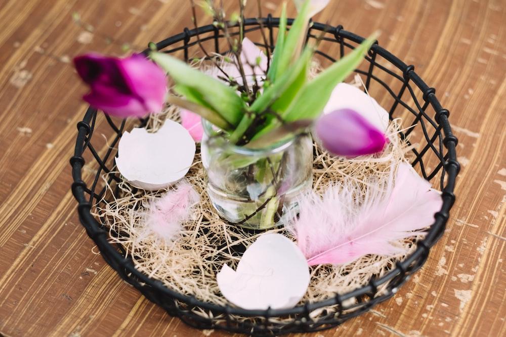 purple flower on clear glass vase