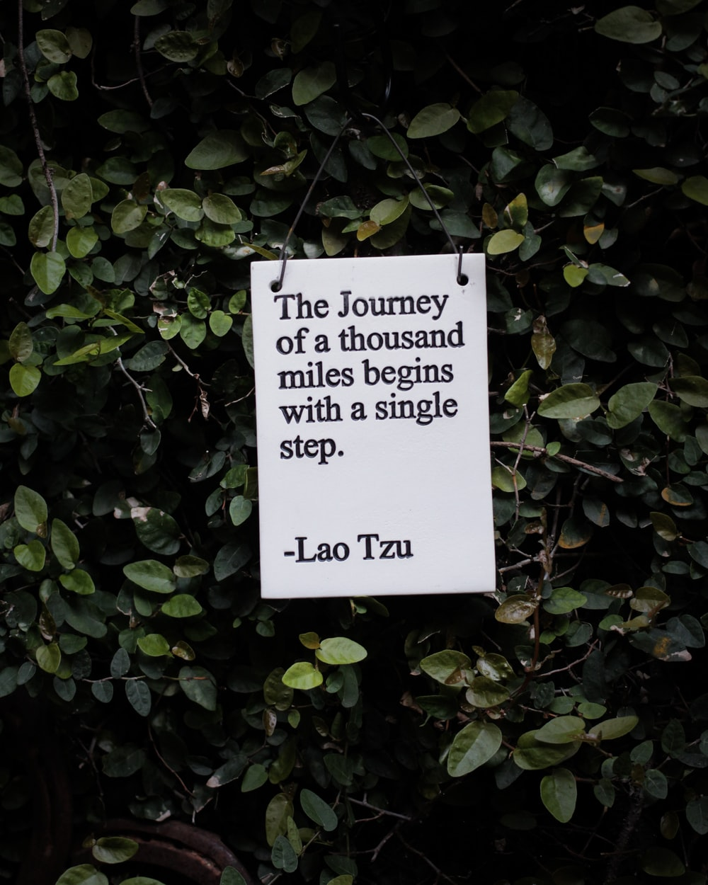 white and black quote board on green plants