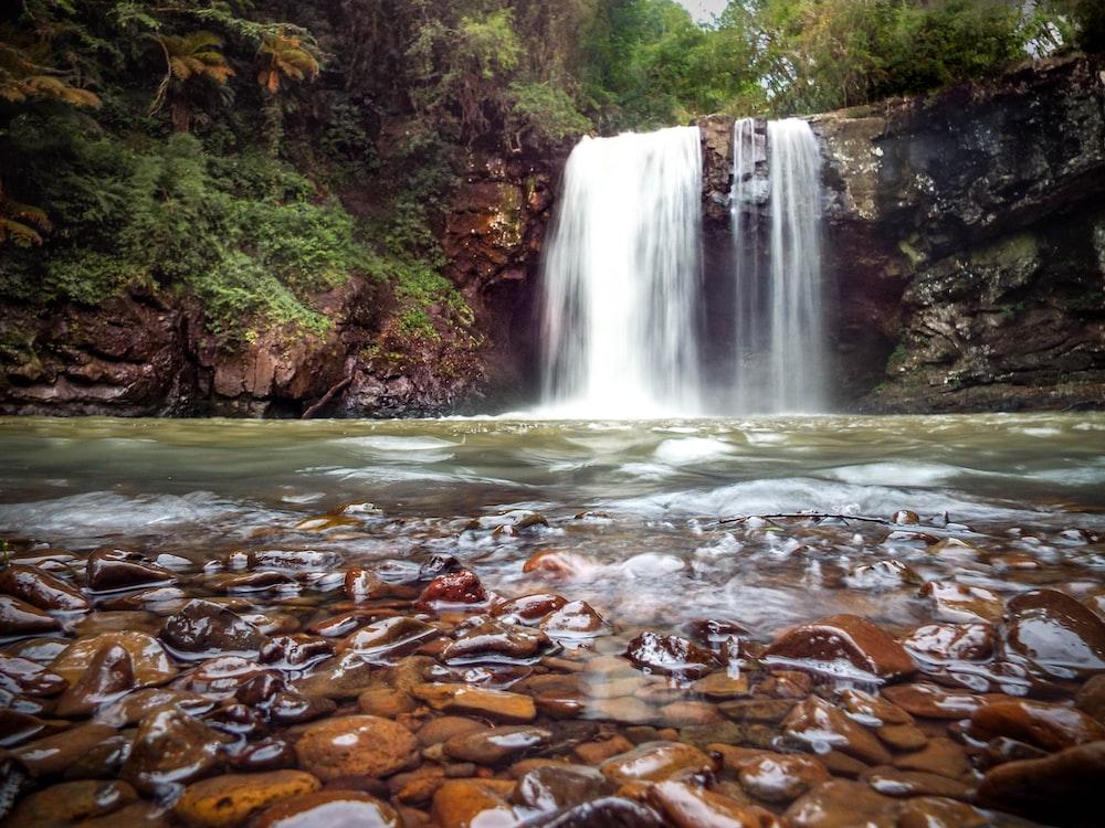 brown leaves on water falls