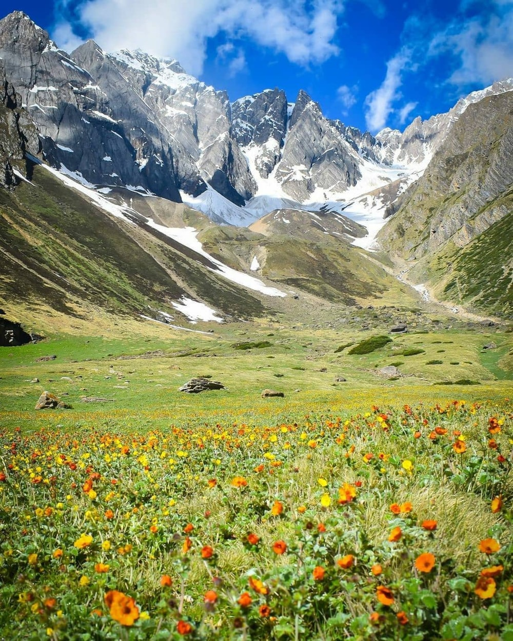 yellow and purple flower field near mountain during daytime