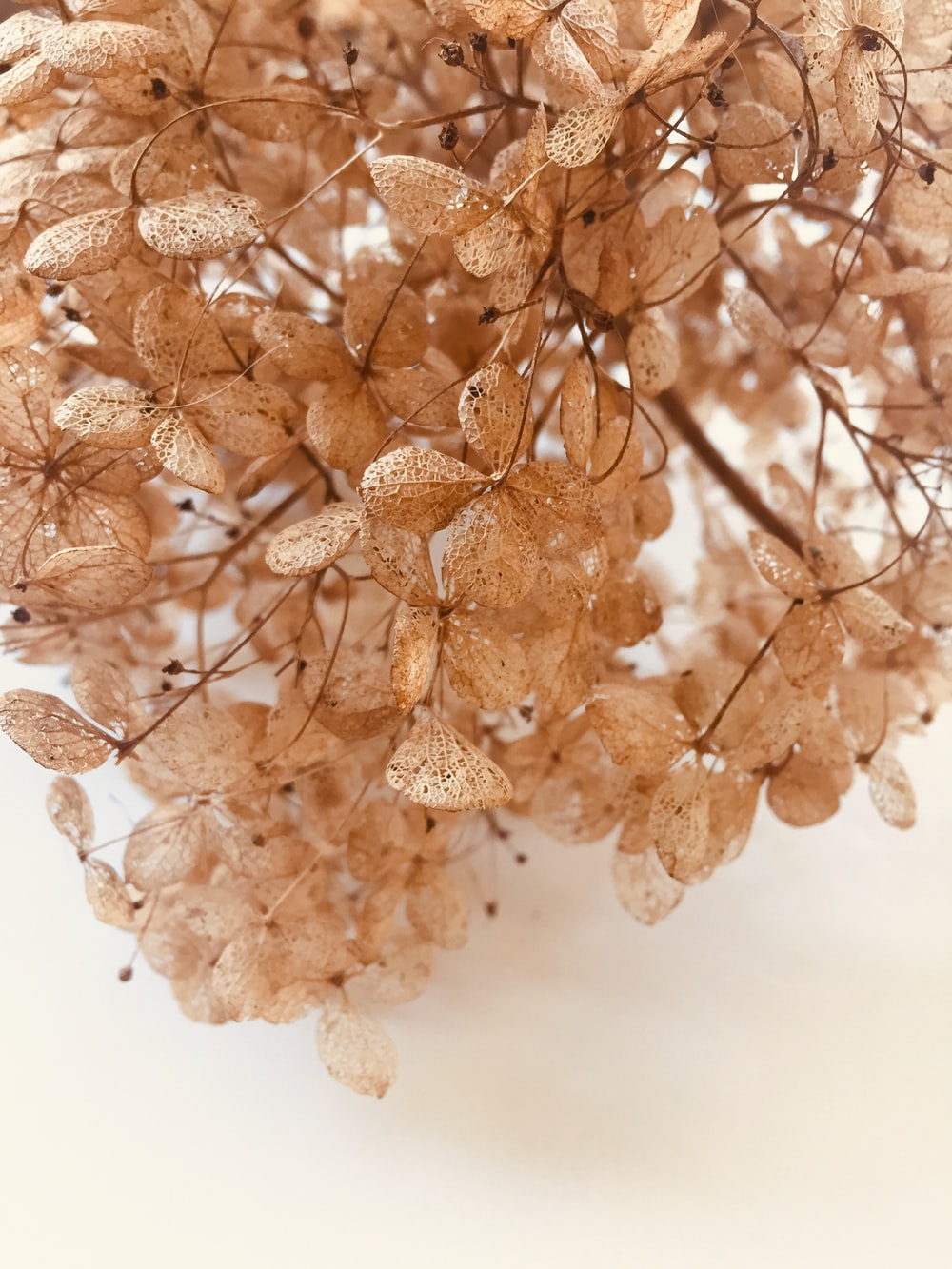 brown and white floral wall decor